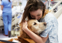 animal therapy for chronic pain